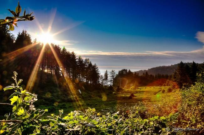 Oregon Coast Sun