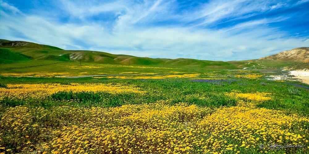 Spring Wildflowers - Taft, CA