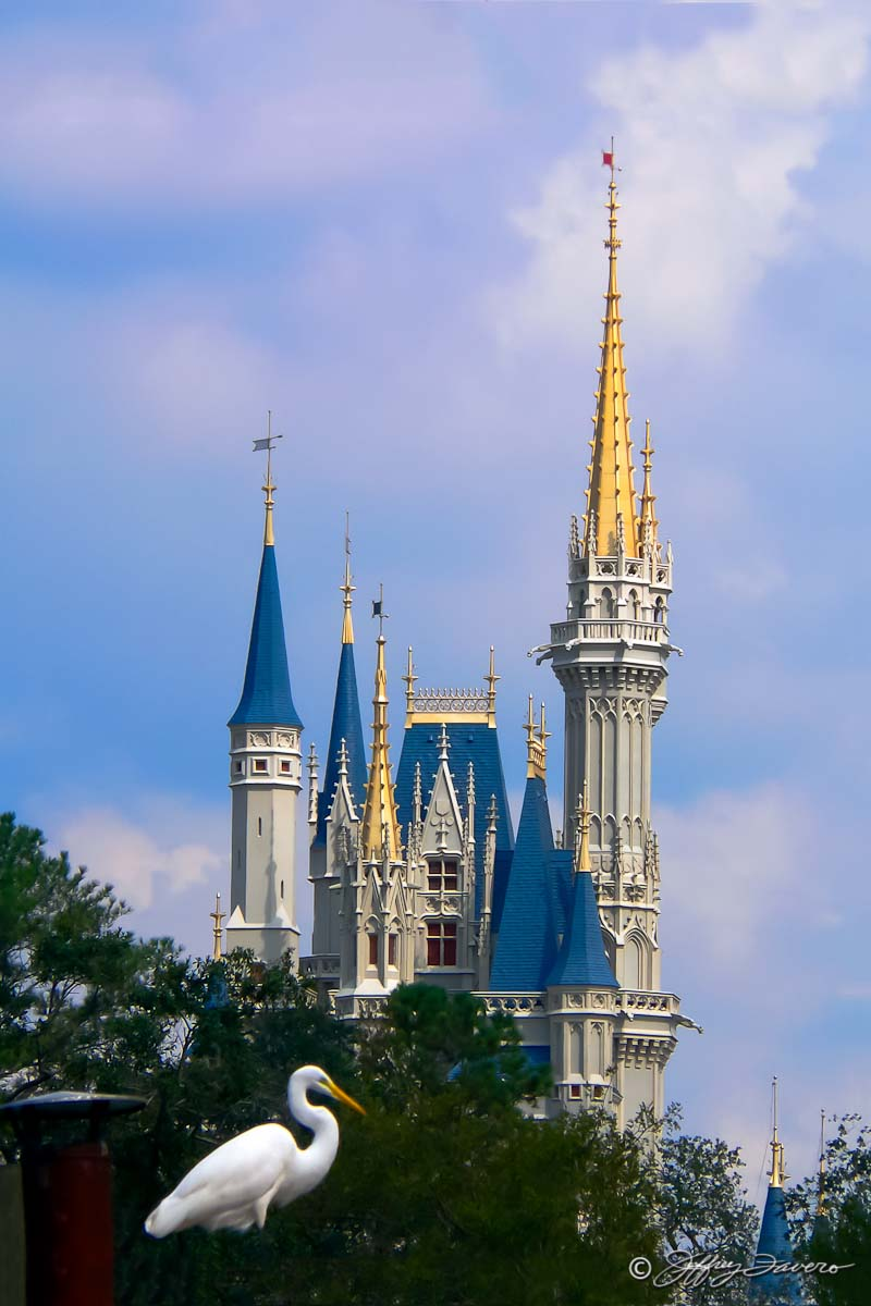 Castle & Egret - Magic Kingdom, Orando