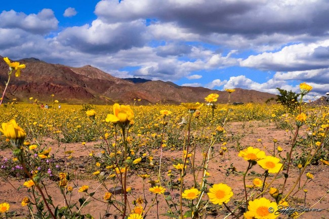 Spring In Death Valley National Park