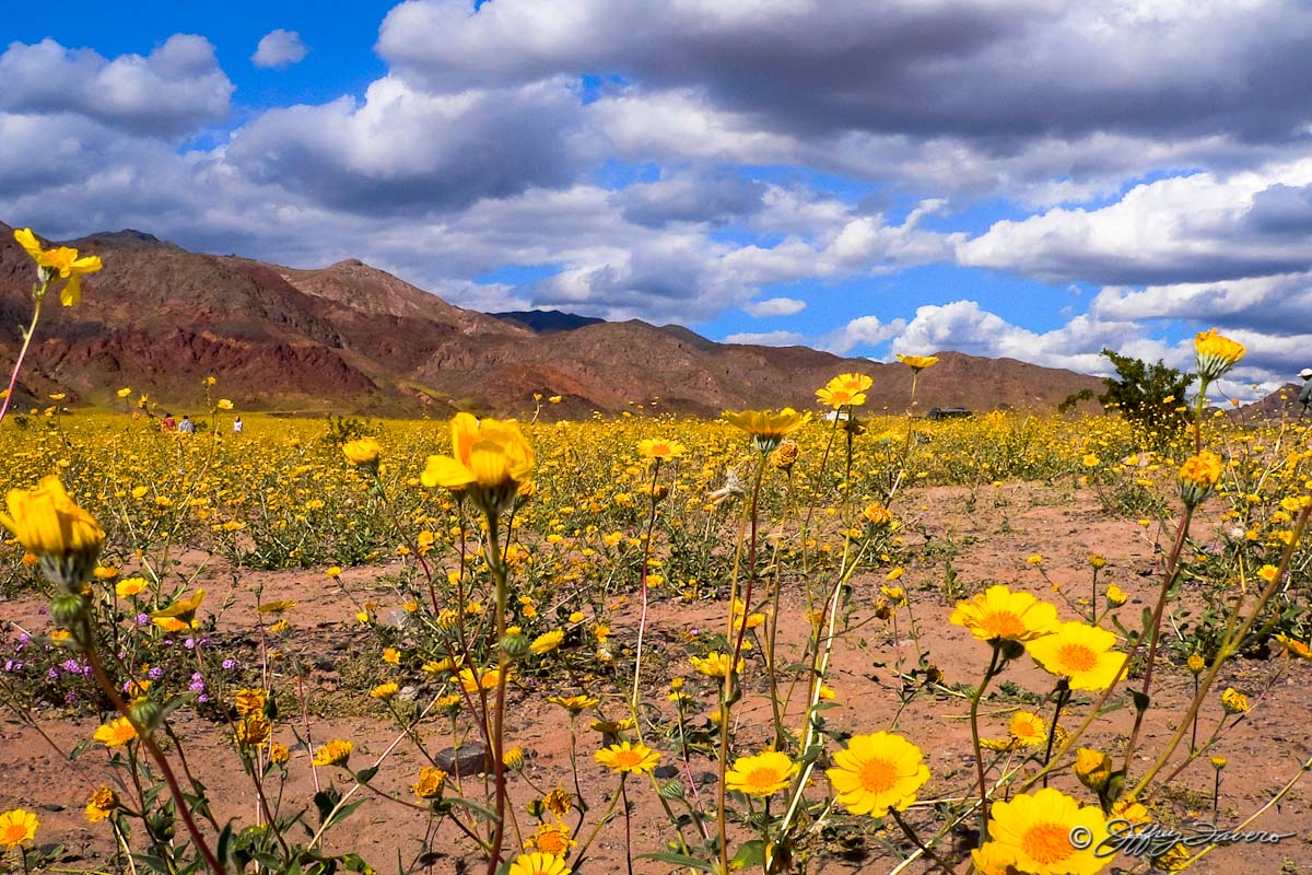 Spring In Death Valley National Park Jeffrey Favero Fine