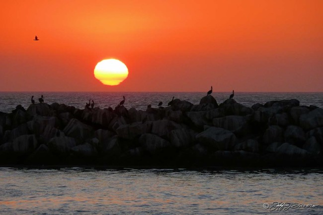Pelican Sunset - Channel Islands National Park