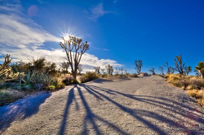 Joshua Shadow - Mojave National Park