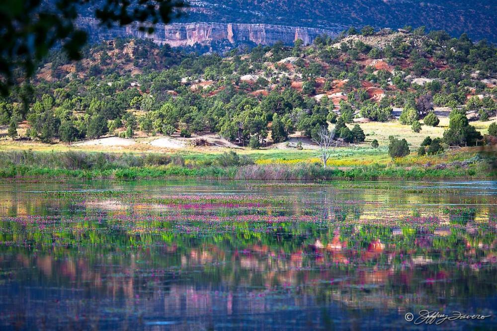 Escalante Petrified Forest State Park - Utah