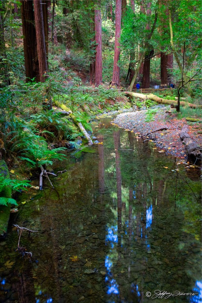 Muir Woods Reflection