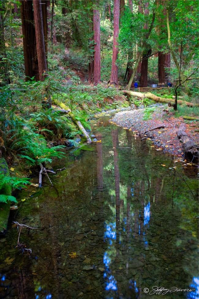 Muir Woods Reflection
