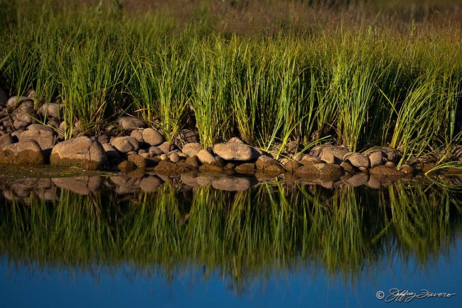 Grass And Rock Reflection