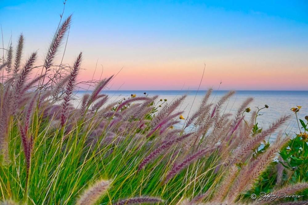 Foxtail Sunset - Malibu, California