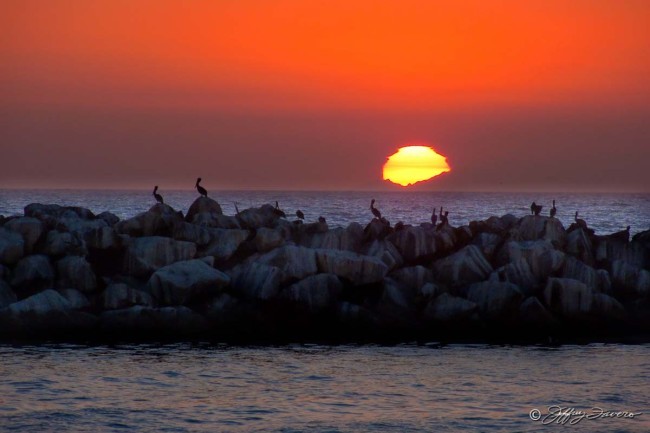 Pelican Sunset - Channel Islands National Park - California