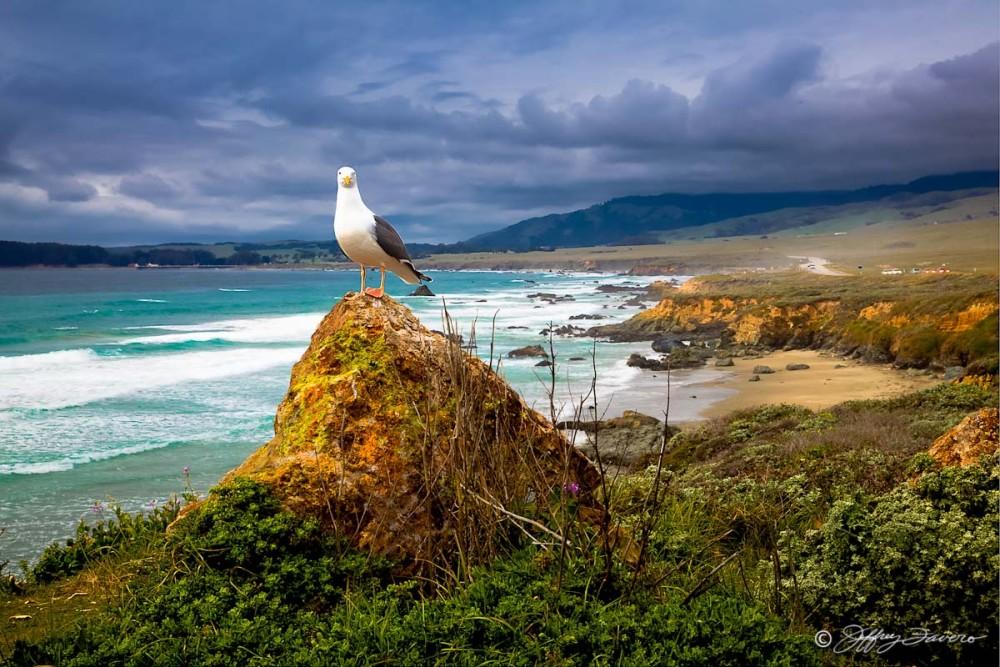 San Simeon Seagull