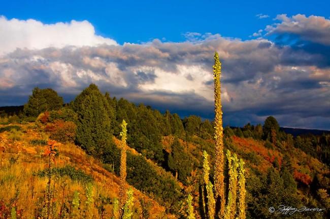 Fall Uinta Mountains