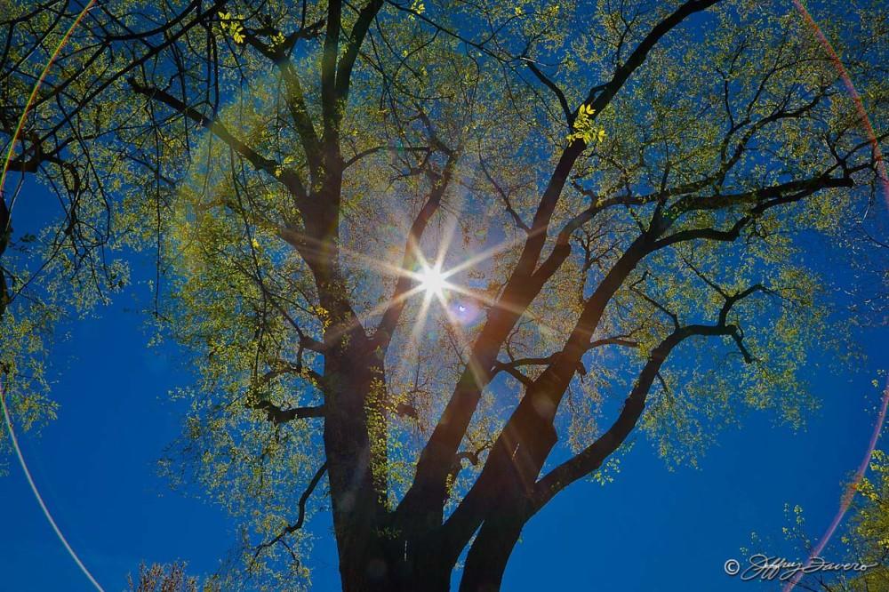Sun Through Spring Leaves