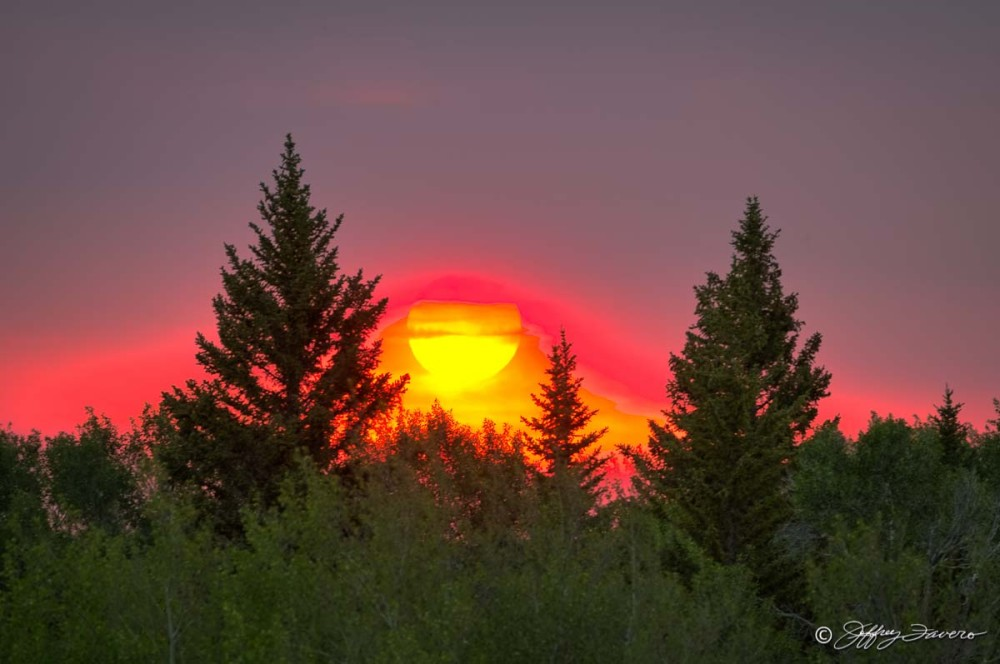 Fiery Sunset Amidst Pines