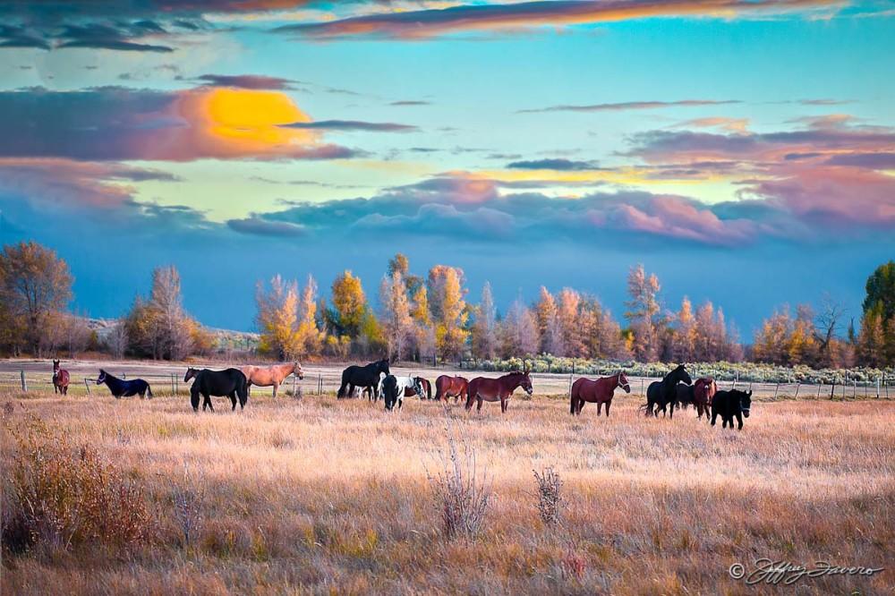 Fall Horses And Mules