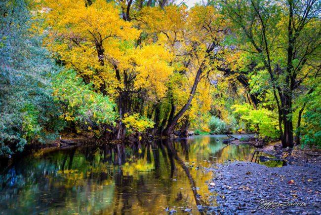 Ogden River Reflection