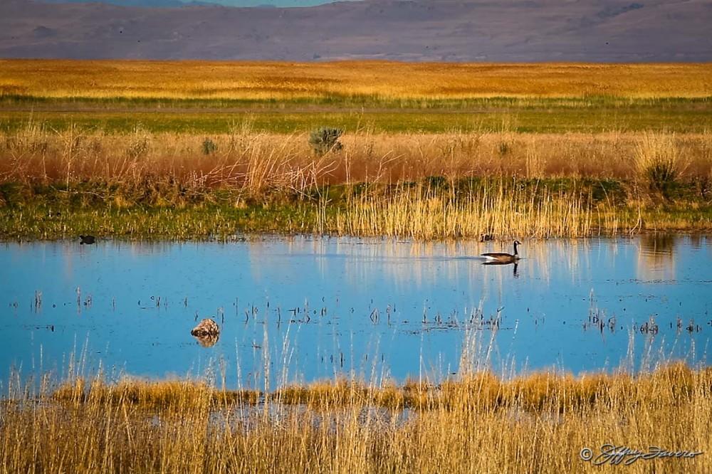 Bear River Bird Refuge
