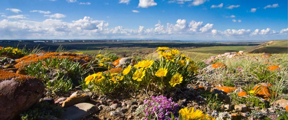 Spring Ridge Flower Panaorama
