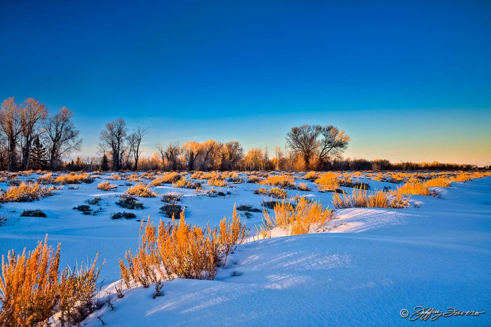 Late Afternoon Winter Sagebrush