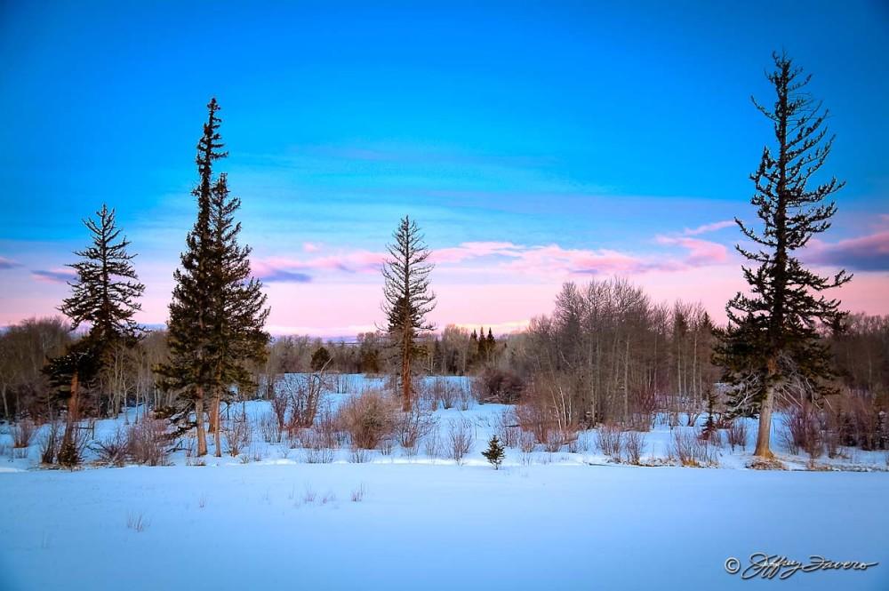Pines, Sky, Snow