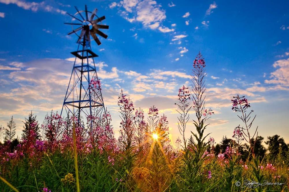 Windmill Flower Sunset