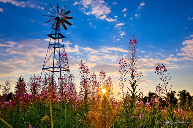 Windmill Flowers Sunset