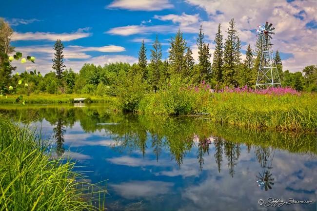 Pine Pond Reflection