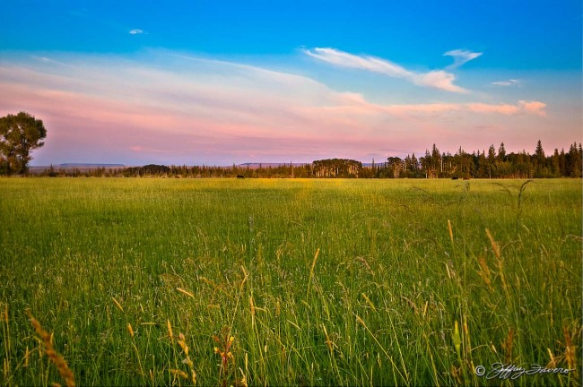 Grassy Meadow At Sunset