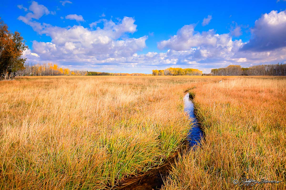 Fall Meadow Grass Jeffrey Favero Fine Art Photography