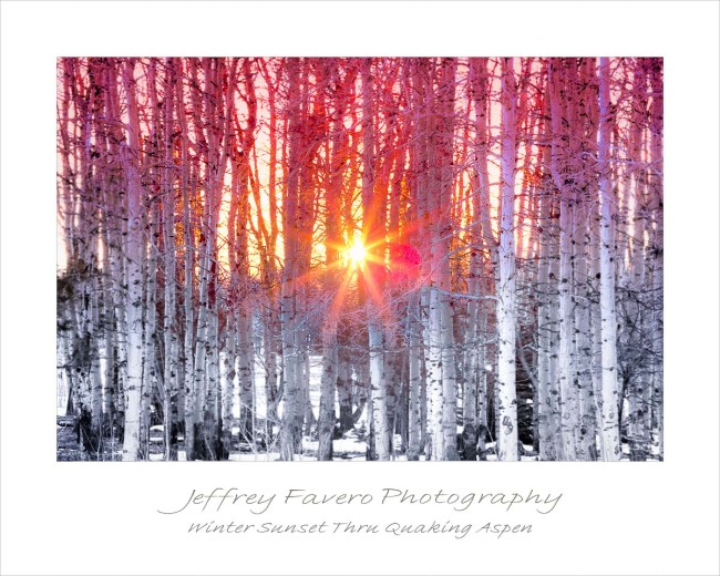 Winter Sunset Through Quaking Aspen