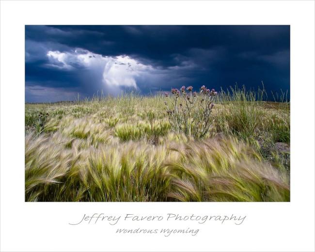 Wondrous Wyoming