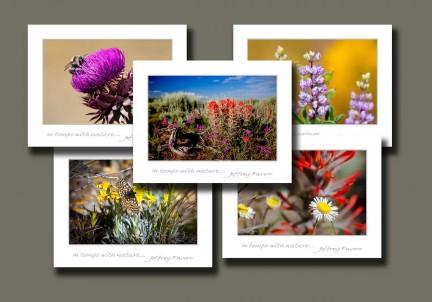 High Mountain Wildflowers