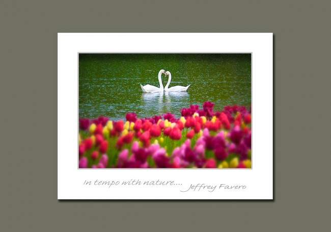 Swan and Tulip Notecards