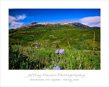 Backside Mt. Ogden - Early June